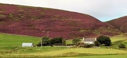 Heathery hills