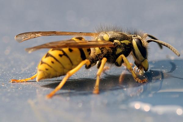 Wasp Feeding by kip55