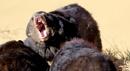 Bear  Confrontation by cjevans4u