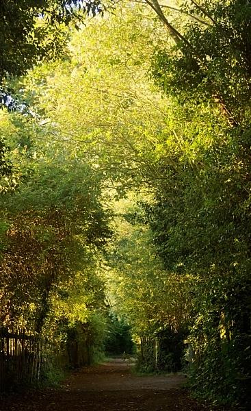 Evening Path by Fenfotos