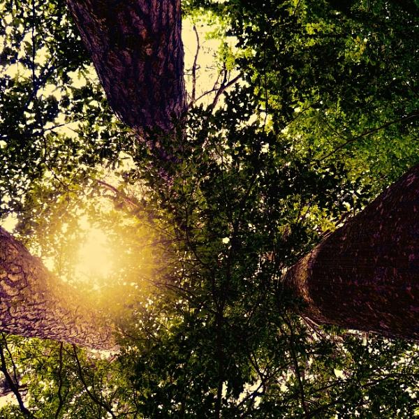 Sunlight Filter by rhfoto