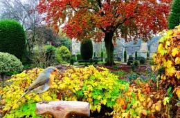 """""""Autumn Colours""""."""