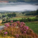 Heather and Mist by martin.w