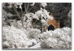 Mottisfont Abbey infrared