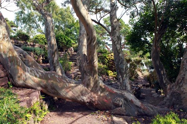 An unusual Tree by akahmed