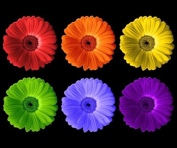 Rainbow Flowers by BarbaraR