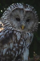 Beaky