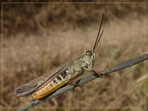 handsome hopper and visitor by CarolG