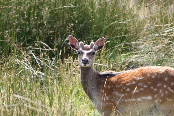 Oh, deer by gbradley