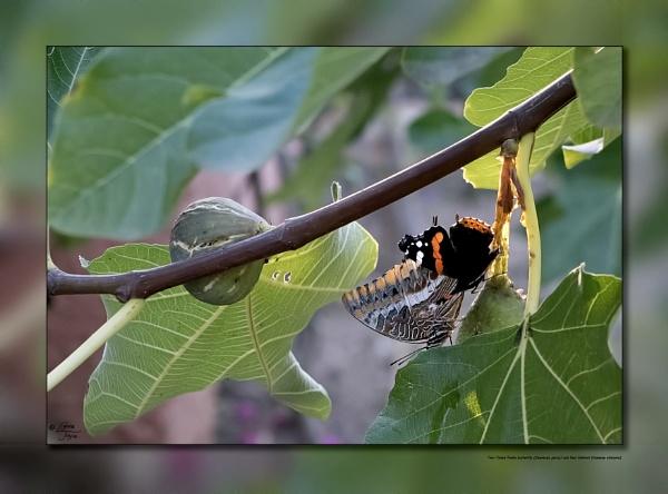 Feasting On Figs by LynneJoyce