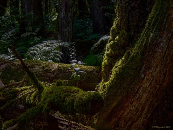 Ferns and Moss by Daisymaye