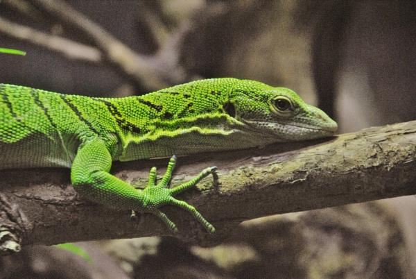 A green dragon... by Chinga