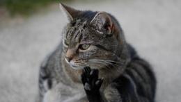 KUNG FOO CAT
