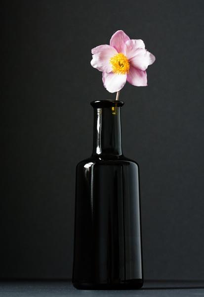 Bottle & Flower by kaybee