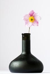 Bottle & Flower II