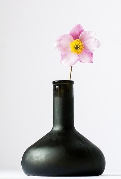 Bottle & Flower II by kaybee