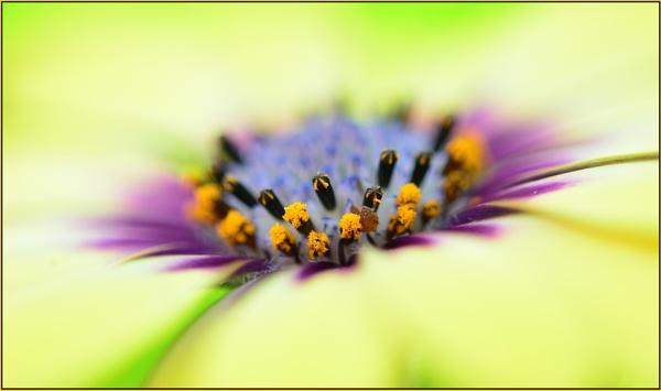 Symphony in pastel by fotobee