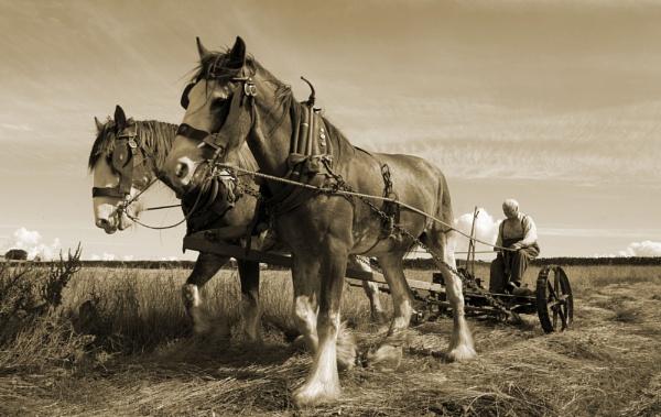 Two Horse Power by danbrann