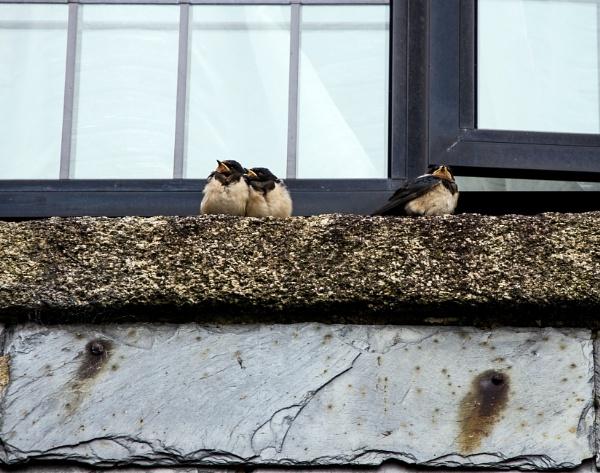 Three little birds by Madoldie