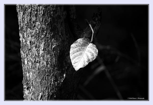 Lonely leaf by ashokynk