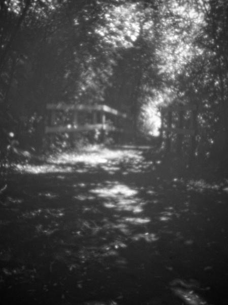 Path Through Trees by Fenfotos