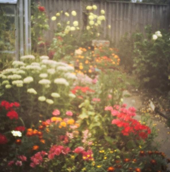 The Garden in August by Fenfotos