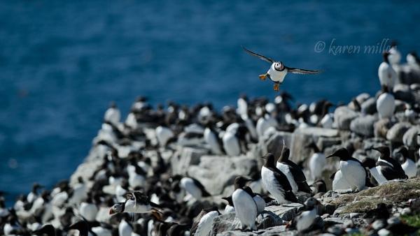 Seabirds by kfjmiller