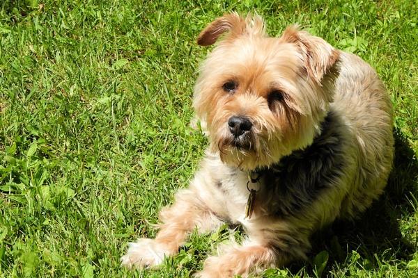 Ginger in the Sunshine