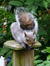 My bushy tail friend