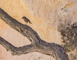 A Little Bird in Cappadocia