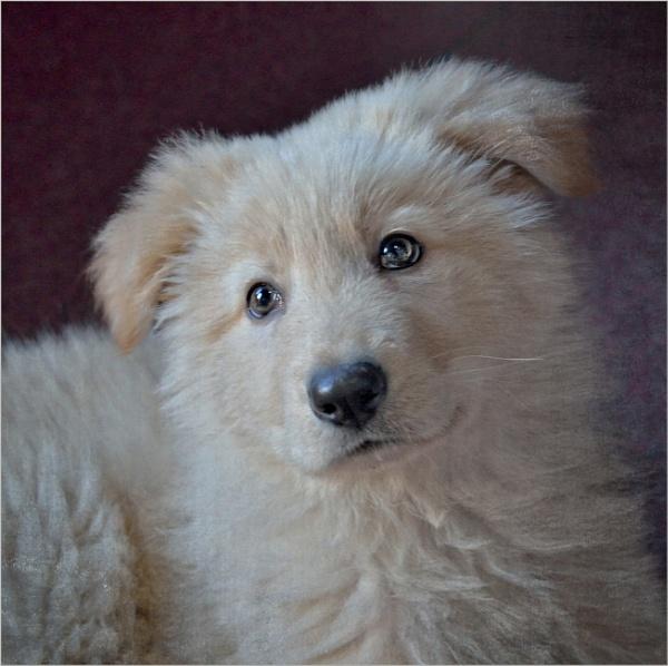 Puppy Love by sweetpea62