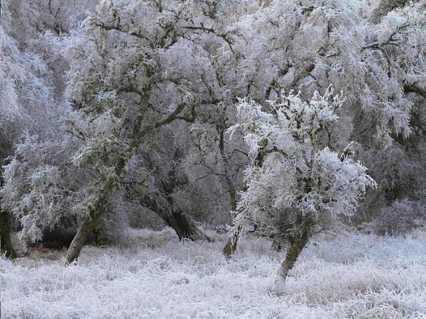 Frost in the Glen by KathrynJ