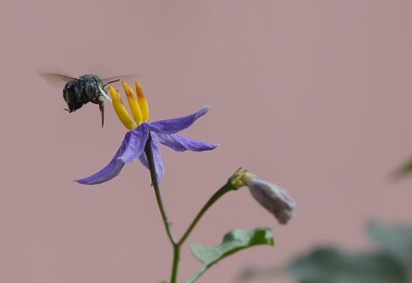 Honey bee by prabhuv