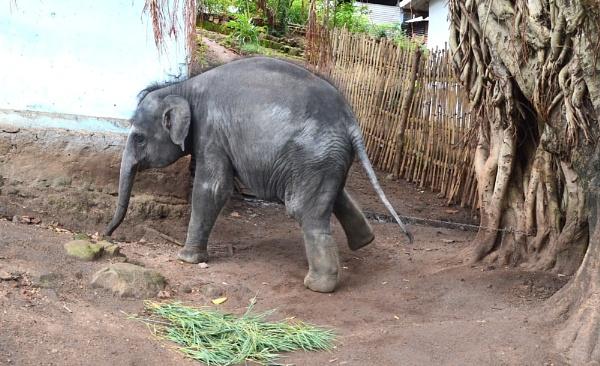 elephant by prabhuv