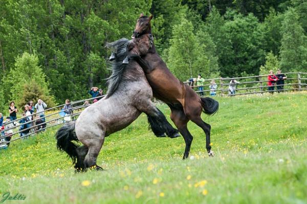 A little fight by jaktis