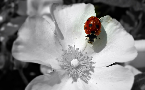 Ladybird by michelle30