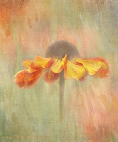 Cone Flower by mashwood10