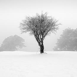 Landscape in the mist III