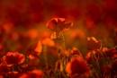Sunlit by ColouredImages