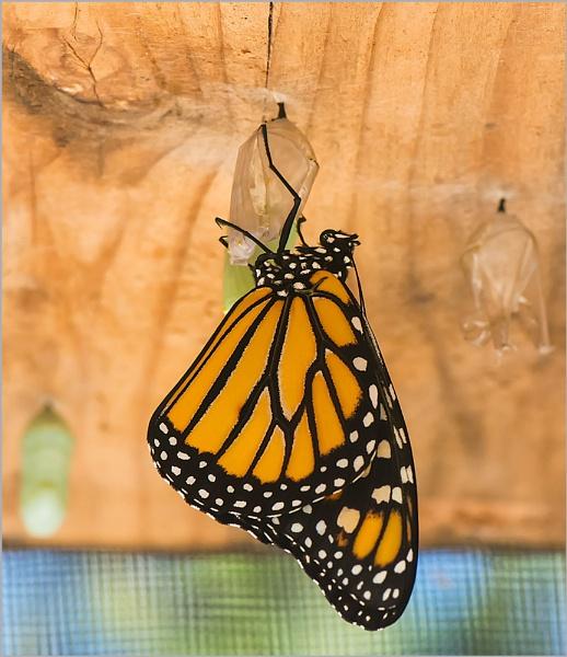 The Newborn Monarch