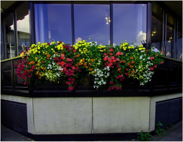 southbank flower prow by RichardNiglas