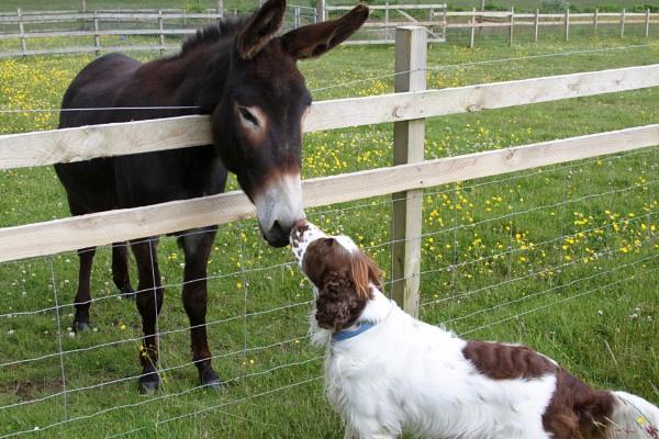 Hello Donkey by Lencollard