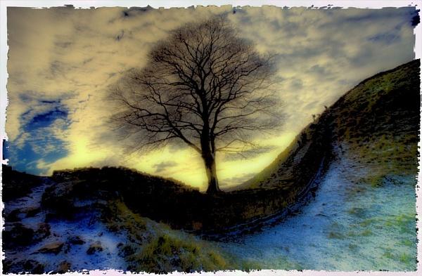 Sycamore Gap by danbrann