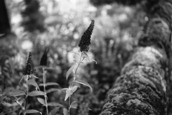 Garden 1 by hollkj