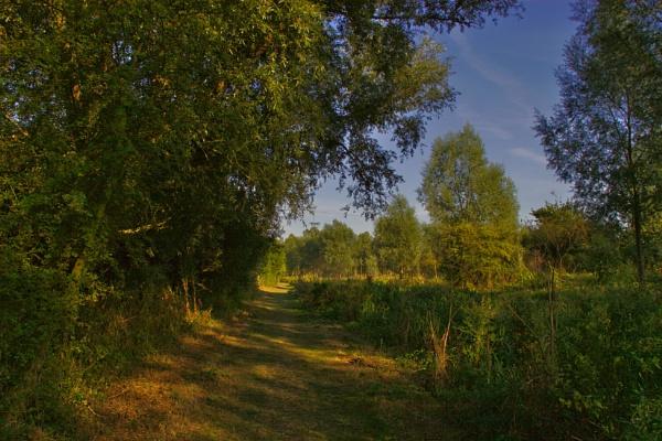 Evening Shadows by ttiger8
