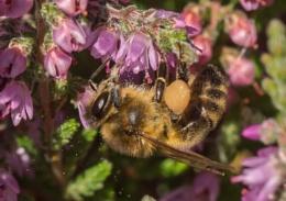 A high pollen count.