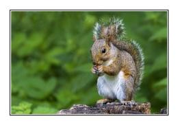 Photo : Grey Feeding