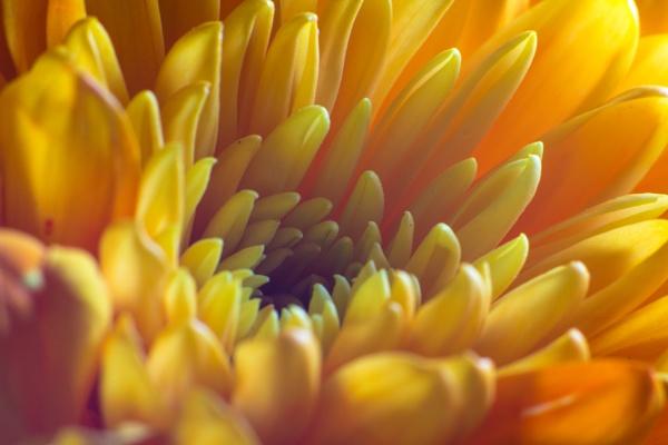 Yellow Flower by grahammooreuk