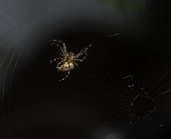 Charlotte\'s Web by brieng