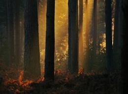 Light Streams